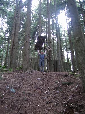 cypress-2